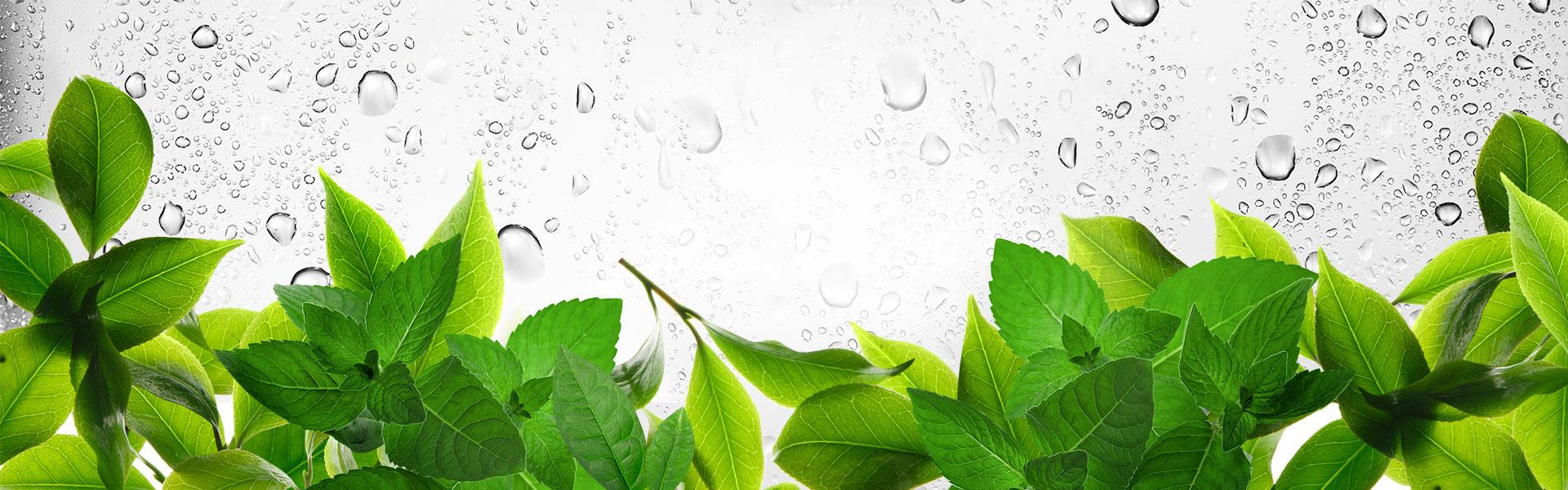 背景 壁纸 绿色 绿叶 树叶 植物 桌面 1920_600